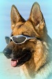 Coast Dog's Avatar